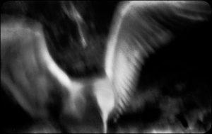 Gulls452_e.jpg
