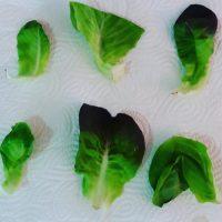 Lettuce by Gali Timen