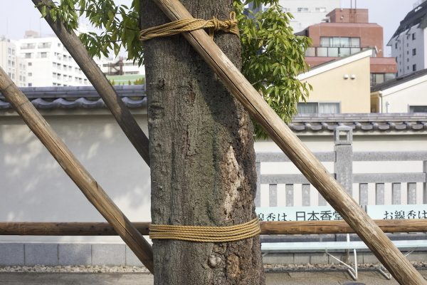 Healy-Tokyo4.jpg