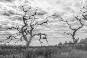 twisted-trees-at-snape_TWP-2lum_sh_tw.jpg