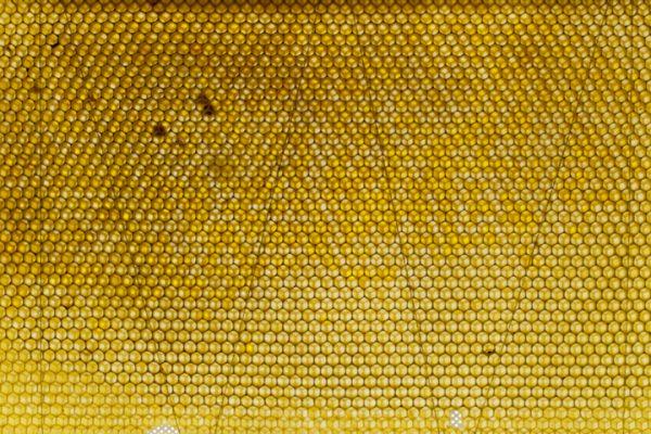 hive_72.jpg