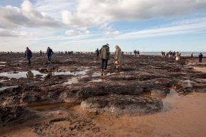 Tourists-study-the-fallen-trees-and-stumps-of-a-prehistoric-forest.-Redcar-beach-North-Yorkshire-England.-2018.jpg