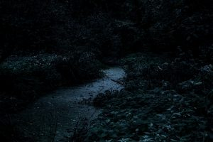 Chilworth-Forest-Stream-2-NIGHT-1500px.jpg