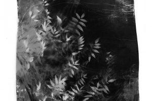 innerlandscape-19-14-Edit.jpg