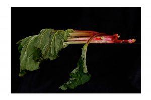 Rhubarb-small-2.jpg
