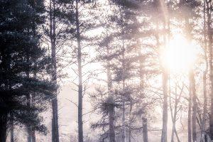 Dawn-Trees-SH.jpg