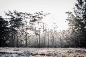 Dawn-Trees-2-SH.jpg