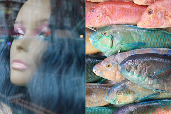 heads_fish.jpg