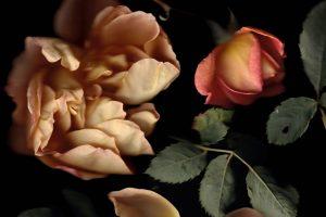 Rosa-The-Lady-of-Shallot_Francesca-Wilkinson-SH.jpg