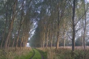 Avenue-of-Trees-Bruern-vlr685747f96a.jpg