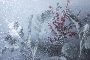Snow-Scene-for-McQueens-Flowers0f6c47e08e.jpg