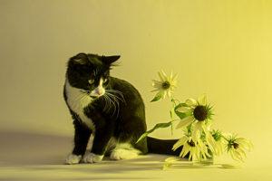 Perdita-with-Sunflowers1e845915b9.jpg