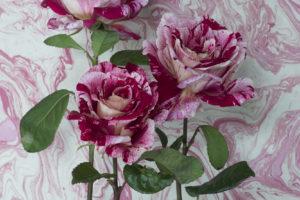 Raspberry-Ripple-for-McQueens-Flowers0f1805e580.jpg