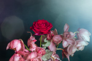 Cinematic-Florals-for-McQueens-Flowers2be974d061.jpg