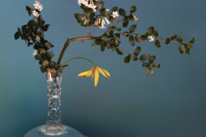 Ikebana-Inspiredc365b10739.jpg
