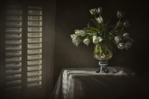 White-Tulips97a4cf04e2.jpg