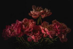 Sue-Oakford-Blush9a5add6708.jpg