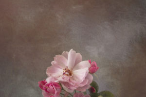 Sue-Oakford-Gone-but-not-forgotten1f9107d203.jpg