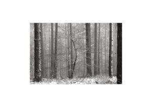 Sciryuda-Sherwood-Forest-1043b24a4f8.jpg