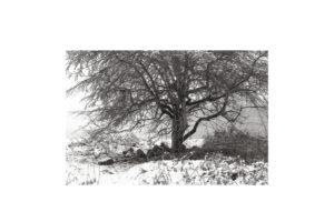 Sciryuda-Sherwood-Forest-2caefb6e281.jpg