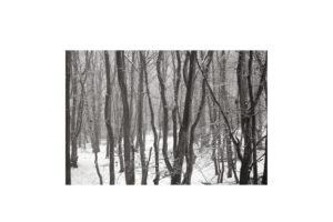 Sciryuda-Sherwood-Forest-3ccf4abc208.jpg