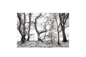 Sciryuda-Sherwood-Forest-5bf94f119f3.jpg