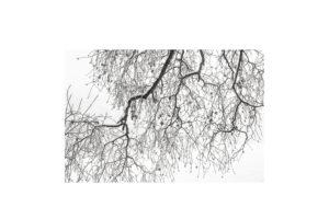 Sciryuda-Sherwood-Forest-61e981c27f7.jpg