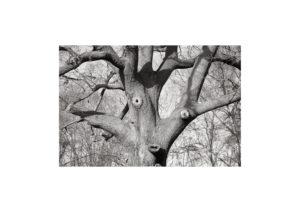 Sciryuda-Sherwood-Forest-72631c30e22.jpg