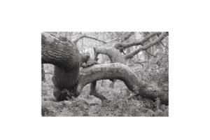 Sciryuda-Sherwood-Forest-8c61a12c98d.jpg