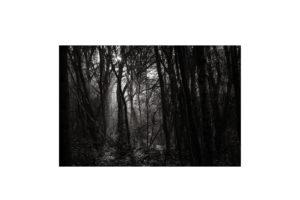 Sciryuda-Sherwood-Forest-93d7f5be61e.jpg