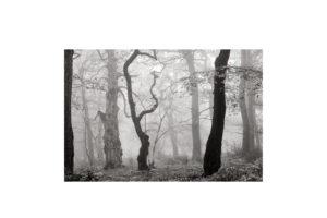 Sciryuda-Sherwood-Forest-10c422df7272.jpg
