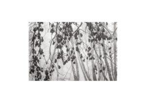 Sciryuda-Sherwood-Forest-11a21afa6302.jpg
