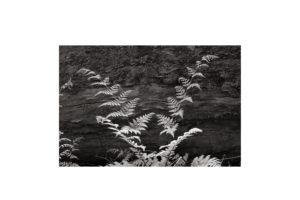 Sciryuda-Sherwood-Forest-122ecfb913e4.jpg