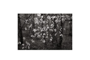 Sciryuda-Sherwood-Forest-135449e15b6b.jpg