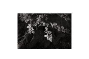 Sciryuda-Sherwood-Forest-1430d278ece8.jpg