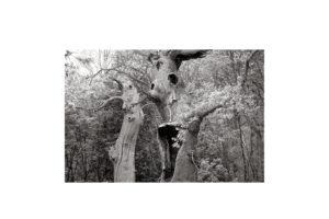 Sciryuda-Sherwood-Forest-153627baac15.jpg