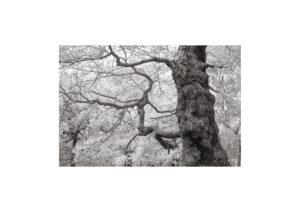 Sciryuda-Sherwood-Forest-16c63567d6ae.jpg
