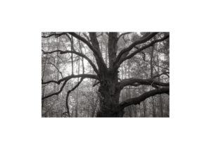 Sciryuda-Sherwood-Forest-1774e1da1352.jpg