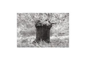 Sciryuda-Sherwood-Forest-18462b679754.jpg