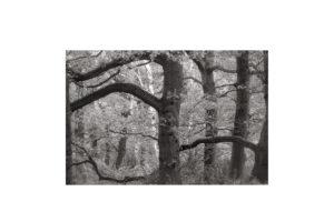 Sciryuda-Sherwood-Forest-19ecedd52318.jpg