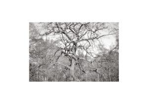 Sciryuda-Sherwood-Forest-20d2499300cb.jpg