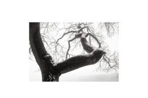 Sciryuda-Sherwood-Forest-4a79d28d9b5.jpg