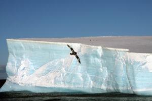 antarctica-001-2d42f9b3ade.jpg