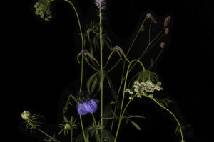 Flora-Dislocata-website-2-correctedec6707dbc8.jpg