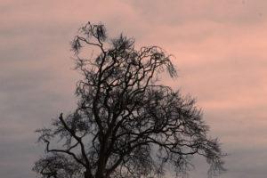 WIP_-a-blanket-of-woven-shadows-_David-Copelandc7c559858e.jpg