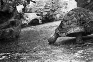 MILLING_tortoise30fbba3fb9.jpg